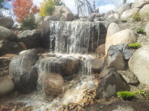 Water feature in the backyard