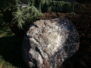 Surface rock