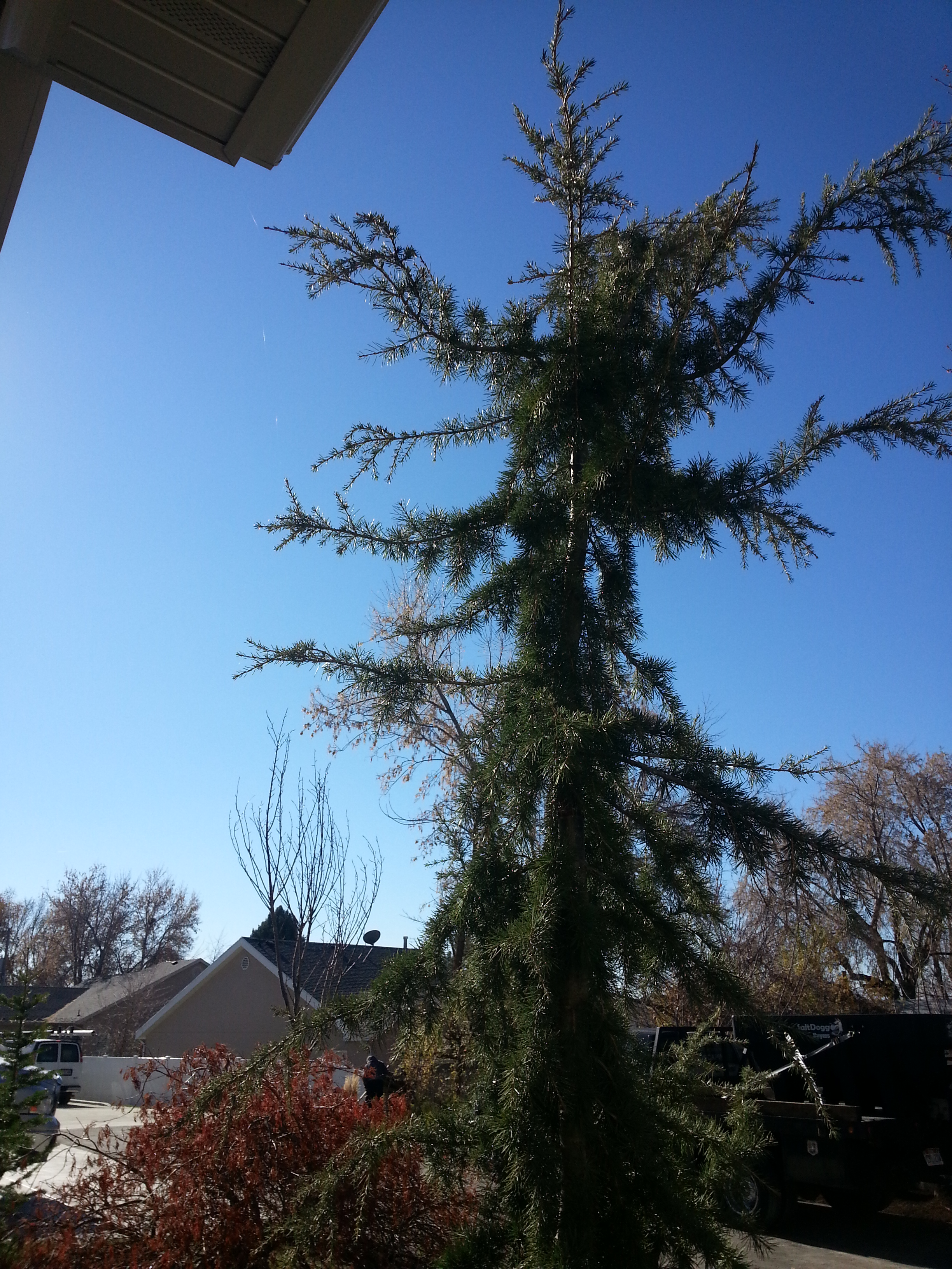 Trees Names In The Salt Lake Utah County And Park City